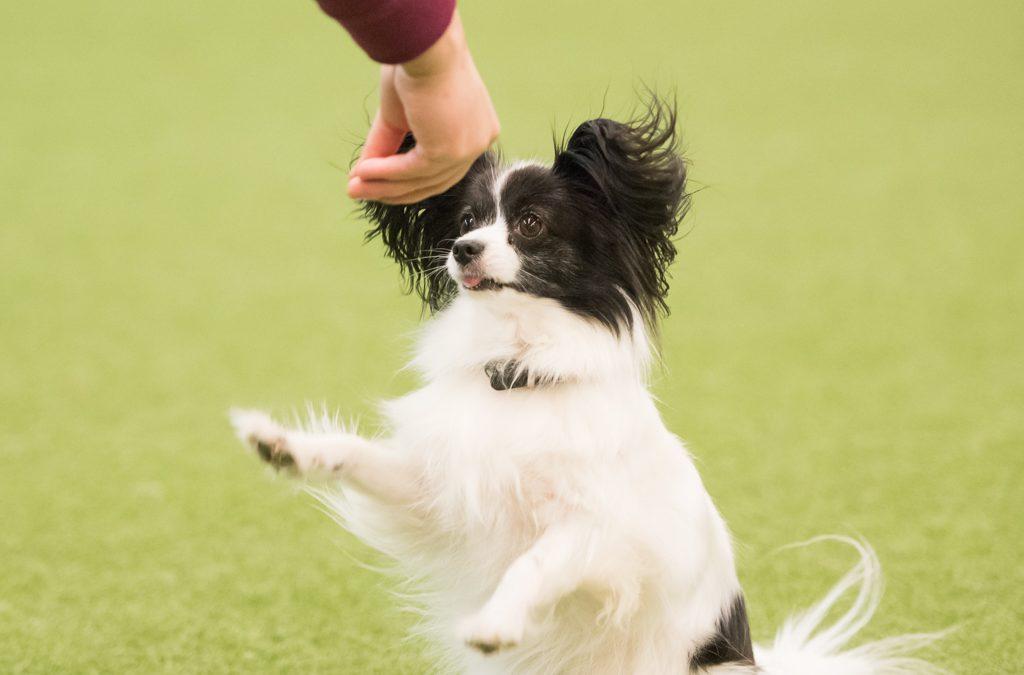 Milloin koira on saanut liikaa karkkia? One free sample – ilmiö