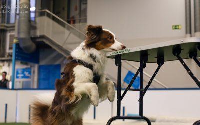 Nosework-koiran itsevarmuus