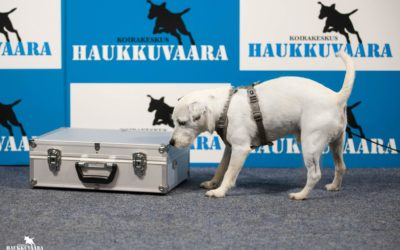 Etsintäalue kouluttaa koiraa